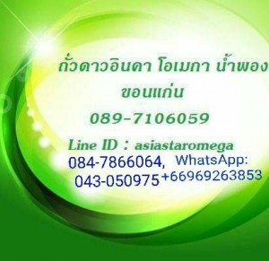 Sacha Inchi Omega Namphong Khonkaen